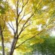 昭和記念公園の色