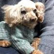 プンちゃんのセーター