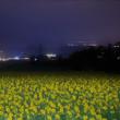 夜も咲くヒマワリ