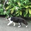 お盆のお供え(お下がり)と送り猫?(^^)