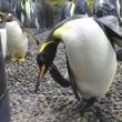 ペンギン音頭