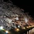 国宝松本城 桜並木 光の回廊