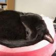 黒猫ジジィは よく寝ます