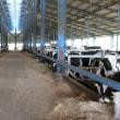 農業法人千葉農産の視察