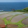 海と水田 in 京丹後
