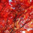 長楽寺の紅葉