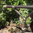 切り株の植木鉢に百日草の苗を