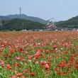 道の駅・笠岡ベイファーム 見渡す限りのポピー畑 平成30年5月14日(月)
