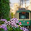 紫陽花便り2018【長谷界隈】江ノ電+紫陽花=やはり混雑
