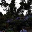 文京区の白山神社の紫陽花祭りへ行って来ました。
