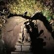 鎌倉長谷寺紅葉ライトアップ★花と眺望の祈願寺★