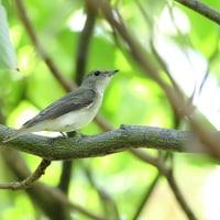 近所の池・・・秋の渡りの小鳥たち! Part-2
