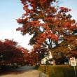 那須野が原博物館で開催されている~那須野が原に農場を~見に行きました