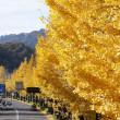 秋の一大イベント 八王子いちょう祭りが開催されます。