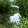 多摩川の怪しい湿地