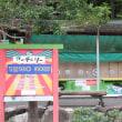 「ぎふ清流里山公園」ではヒマワリとコスモスが満開です。