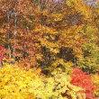 今年の紅葉は栂池高原で
