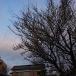 花曇りという感じの空です