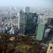 東京都庁周辺の紅葉と都庁から展望