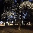 代々木公園の桜はまだだ
