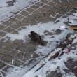 極寒地の生き物たち