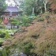 ☆天草・本渡の秋の祭りそして菊花展