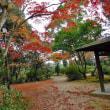 天拝公園の紅葉