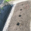 落花生の播種と発芽