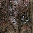 森林公園の節分草2018他