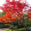 万博の美しい紅葉