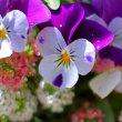 小さな庭に春