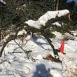 大雪の傷痕