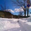 久々の大雪です。
