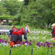 横須賀しょうぶ園その2