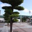 旧街道を訪ねて 千葉・八日市場(2)