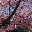 春の兆し!! 椿の花と猫🌼
