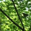 Ж 黒白の模様が目立つ野鳥、シジュウカラ、ドキドキ眺め Ж G公園(岐阜県岐阜市)