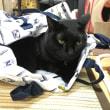 猫が入れるボストンバッグ、に黒猫入る