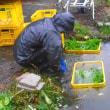 秋冷雨 うたれて しゃっきり お菜洗い (菜人)