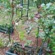 猫から守る庭木のガード柵