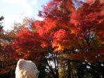 京都紅葉便り。京都屈指の紅葉の名所「永観堂」。約3千本の楓が、人々を魅了する見事な景色