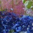 フィーカの会と花あそび