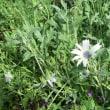 庭の花の種採り