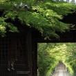 輪王寺の参道