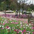 アンデルセン公園 メルヘンの丘のコスモス