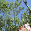 高田本山の花と茶所