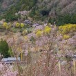 西吉野&下市の山郷は花盛り