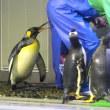 王様ペンギンの攻撃