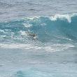 ホオキパビーチ2018年2月ハワイ旅行記7日目その30