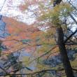 山紀行(冬近しの裏丹沢 犬越路から行く大室山稜線 2017.12.3)